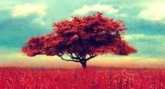 壁纸欣赏:大自然中的一棵树2