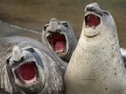 幽默野生动物摄影大赛赏