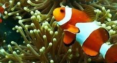 色彩绚丽的海底生物鱼图片壁纸