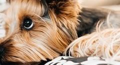 可爱小狗高清大图壁纸