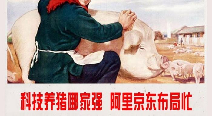 科技养猪哪家强 阿里京东布局忙