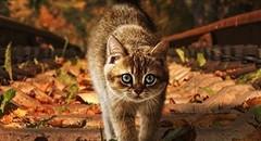 秋天落叶中的可爱小动物图片壁纸