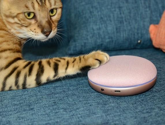 连猫咪都喜欢的智能音箱你还不了解一下吗?