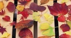 秋季剪影-秋天印象壁纸