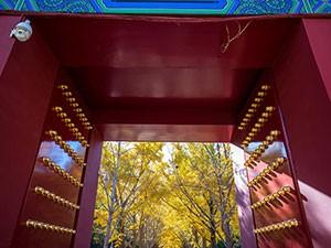 秋日京城美景 索尼FE 24mm F1.4实拍样张赏