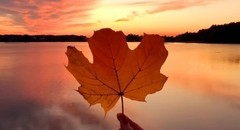 秋叶纷飞的唯美图片壁纸
