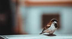 站在枝头的鸟手机图片壁纸