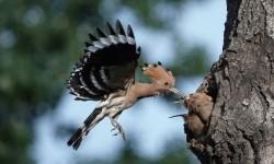 佳能长焦金银棋牌打造全方位观鸟体验