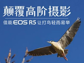 佳能EOS R5让打鸟轻而易举
