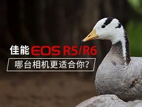 佳能EOS R5、R6更适合你 ?