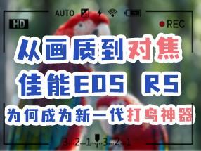 佳能EOS R5成为新一代打鸟神器